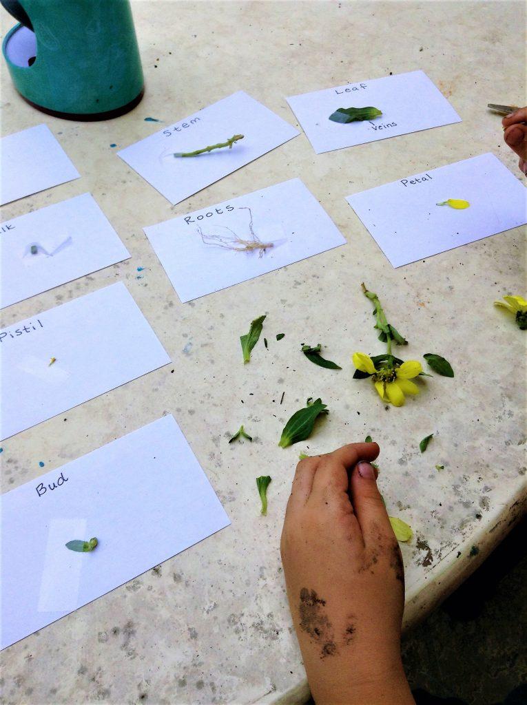 20 Fun Preschool Stem Activities The Homeschool Resource Room
